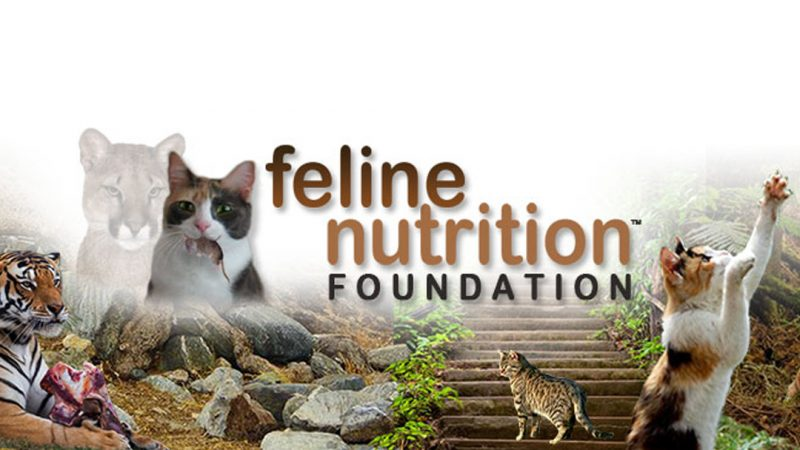 Feline Nutrition: One Page Guides
