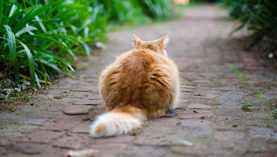 Feline Hyperthyroidism Jackson Galaxy