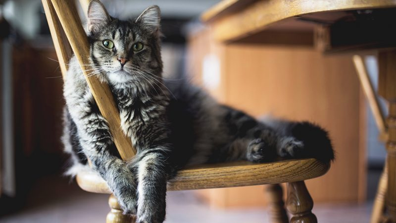 The Benefits of Adopting a Senior Cat (or Pet)