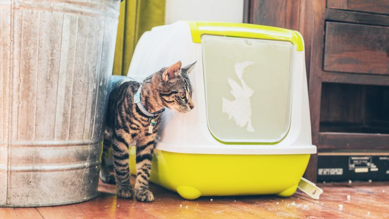 You're Setting-up Your Litter Box All Wrong