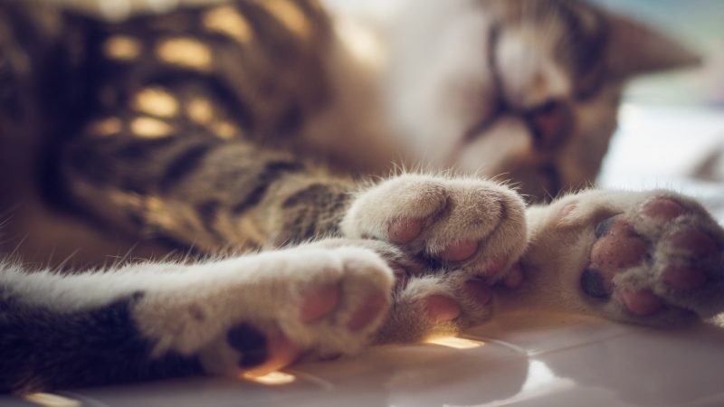 Declawing: Don't Do It!