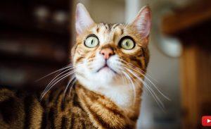 Your Cat's Behavior, Cat Mojo 101