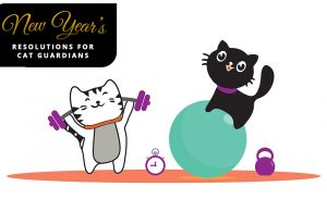 Resolutions for a Healthy Cat: Catify