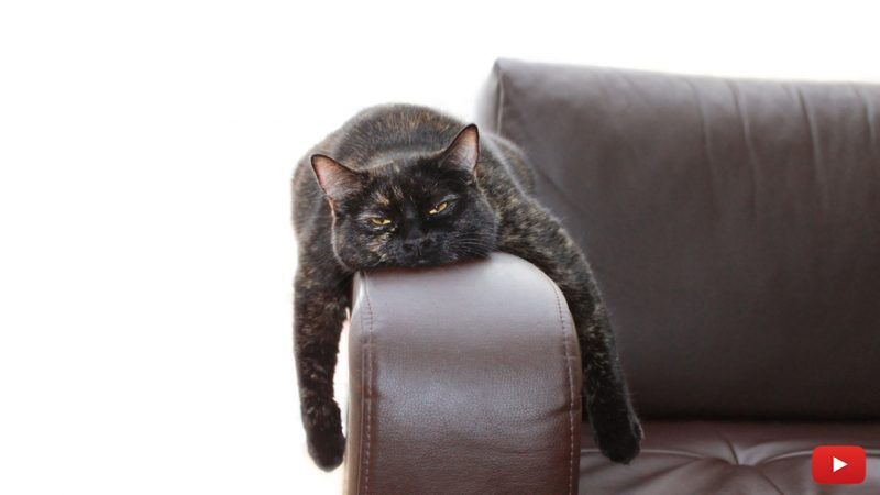 What You Should Do If Your Cat is Sick