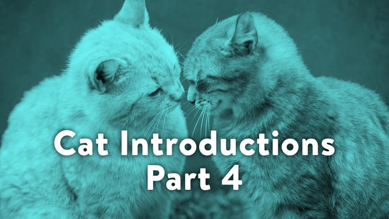 Cat Introductions Part 4: Love at First Sight