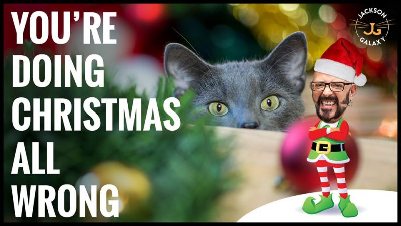 The Ugly Truth About Cats and Christmas Trees Plus More Holiday Tips