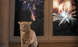 How to Keep Cats & Dogs Safe, Calm, & Sane During Fireworks and Holidays