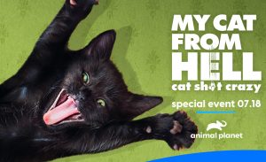 Special Episode of My Cat from Hell Premieres this Saturday, July 18th on Animal Planet