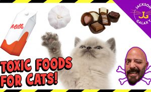Foods That Are Toxic to Cats: From Deadly to Upset Stomachs