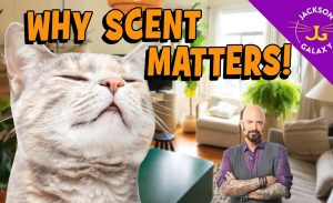 Why Scent Marking Matters: The Ultimate Cat Confidence