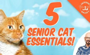 5 Essential Tips for Life with Senior Cats