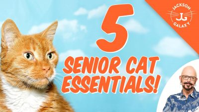 senior cat tips jackson galaxy