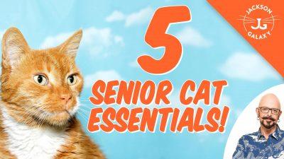 senior cat tips jackson galaxy