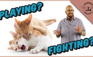 How To Tell the Difference Between Cats Playing and Fighting