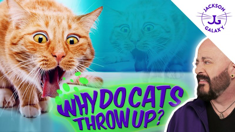 Ewww Spew! Why Does My Cat Throw Up?