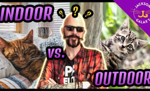 Indoor Cat Vs. Outdoor Cat?