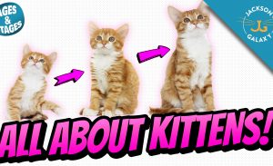 All About Kittens: Kitten Growth Stages & Milestones