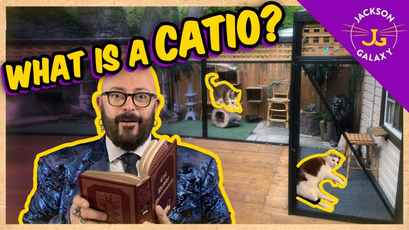 What is a Catio?